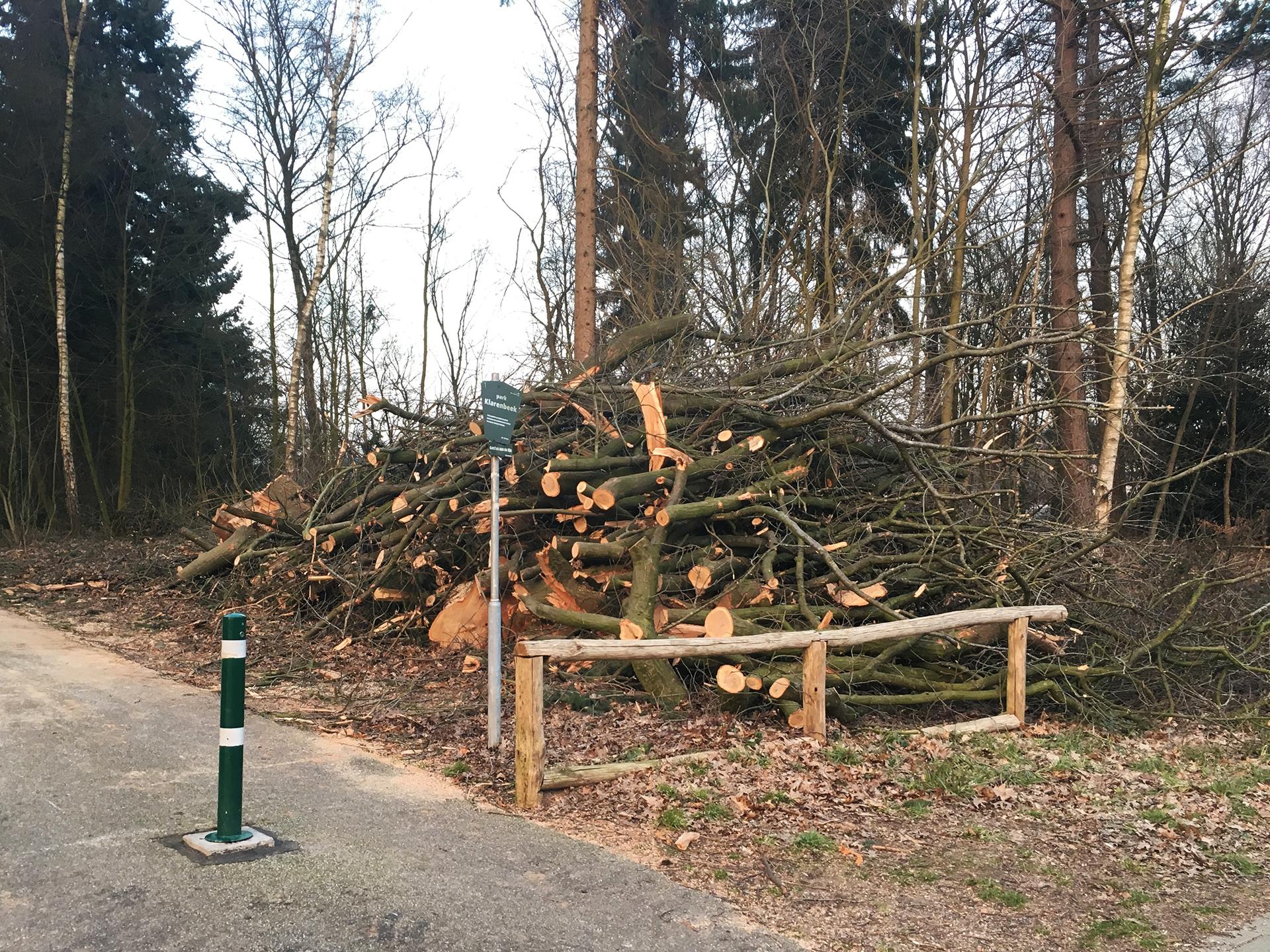 Bomen Thomas á Kempislaan gekapt