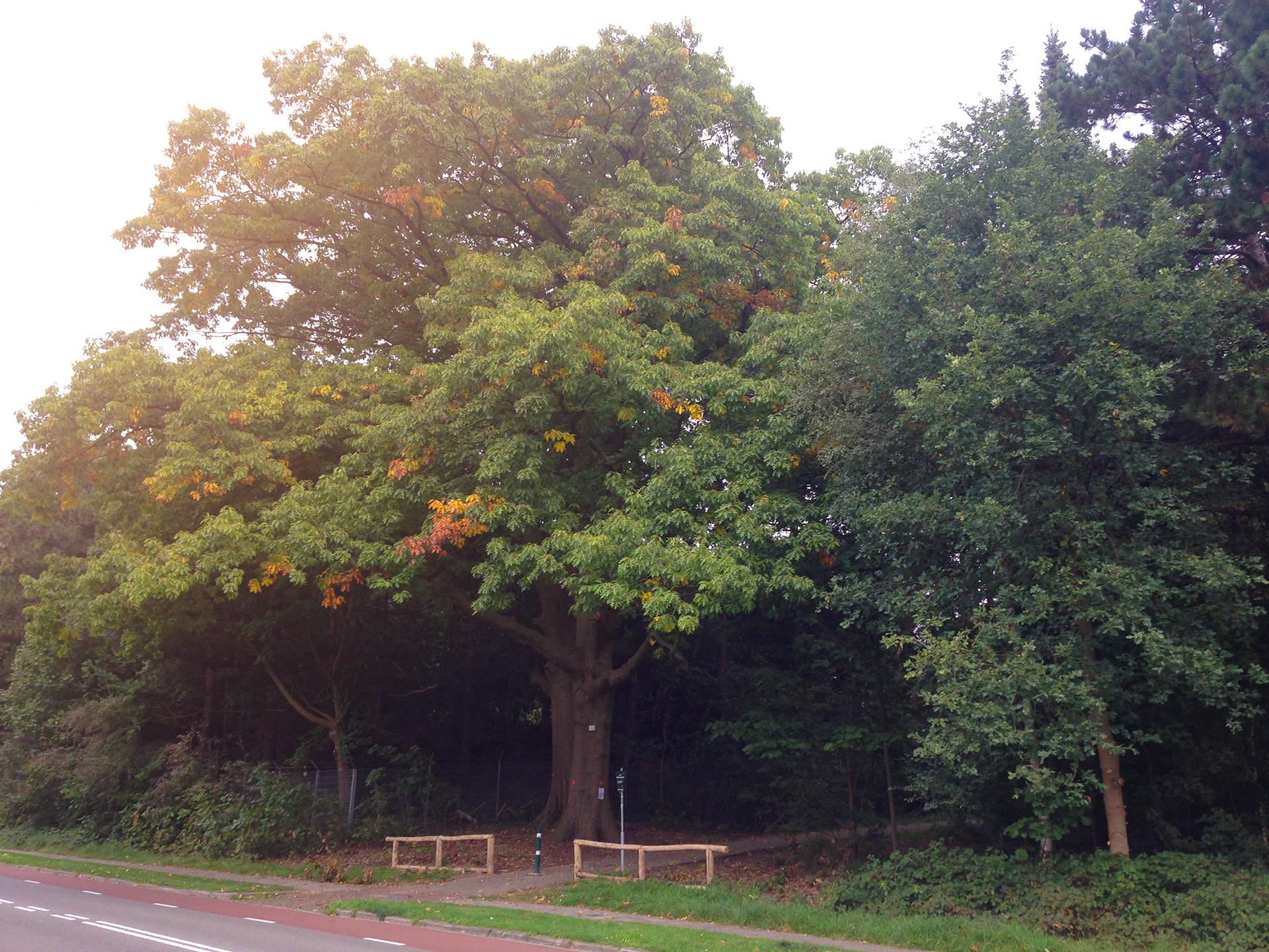 Beleid bomen kappen in onze wijk