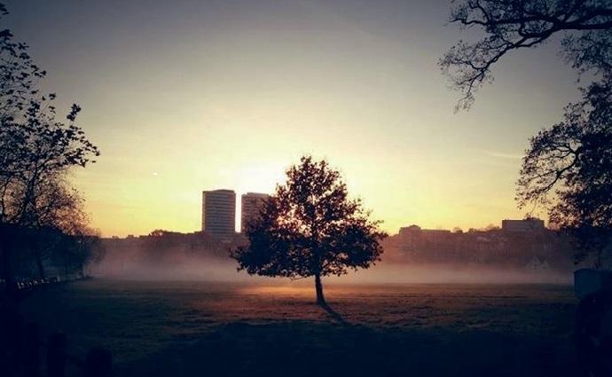 Bomen in Arnhem: Leuke en interessante weetjes!