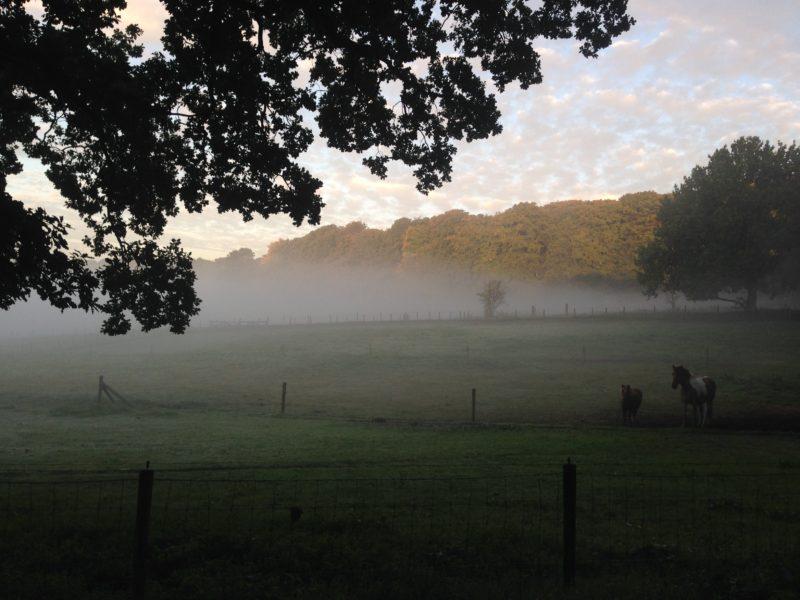 Wandeling/schouw park Klarenbeek op Donderdag 24 oktober. Start 15.00uur