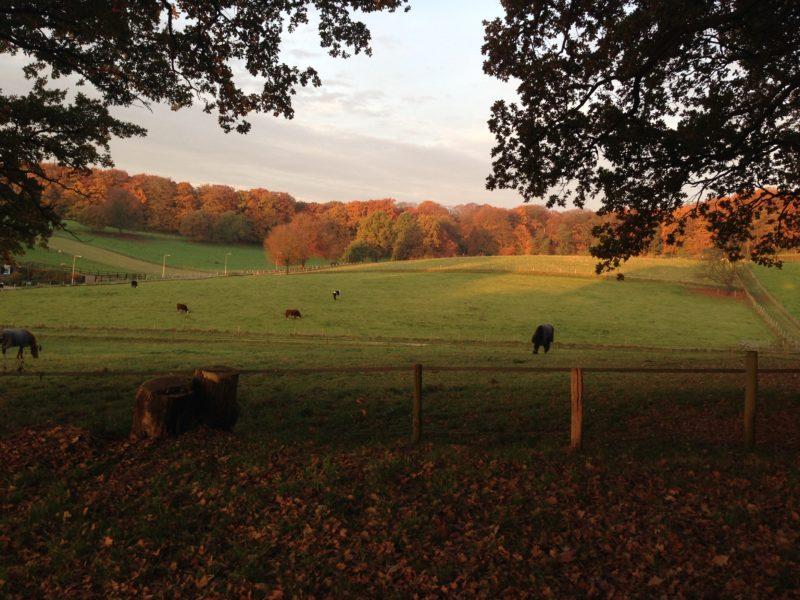 Informatieve rondgang/ wandeling uitdunnen bomen Park Klarenbeek