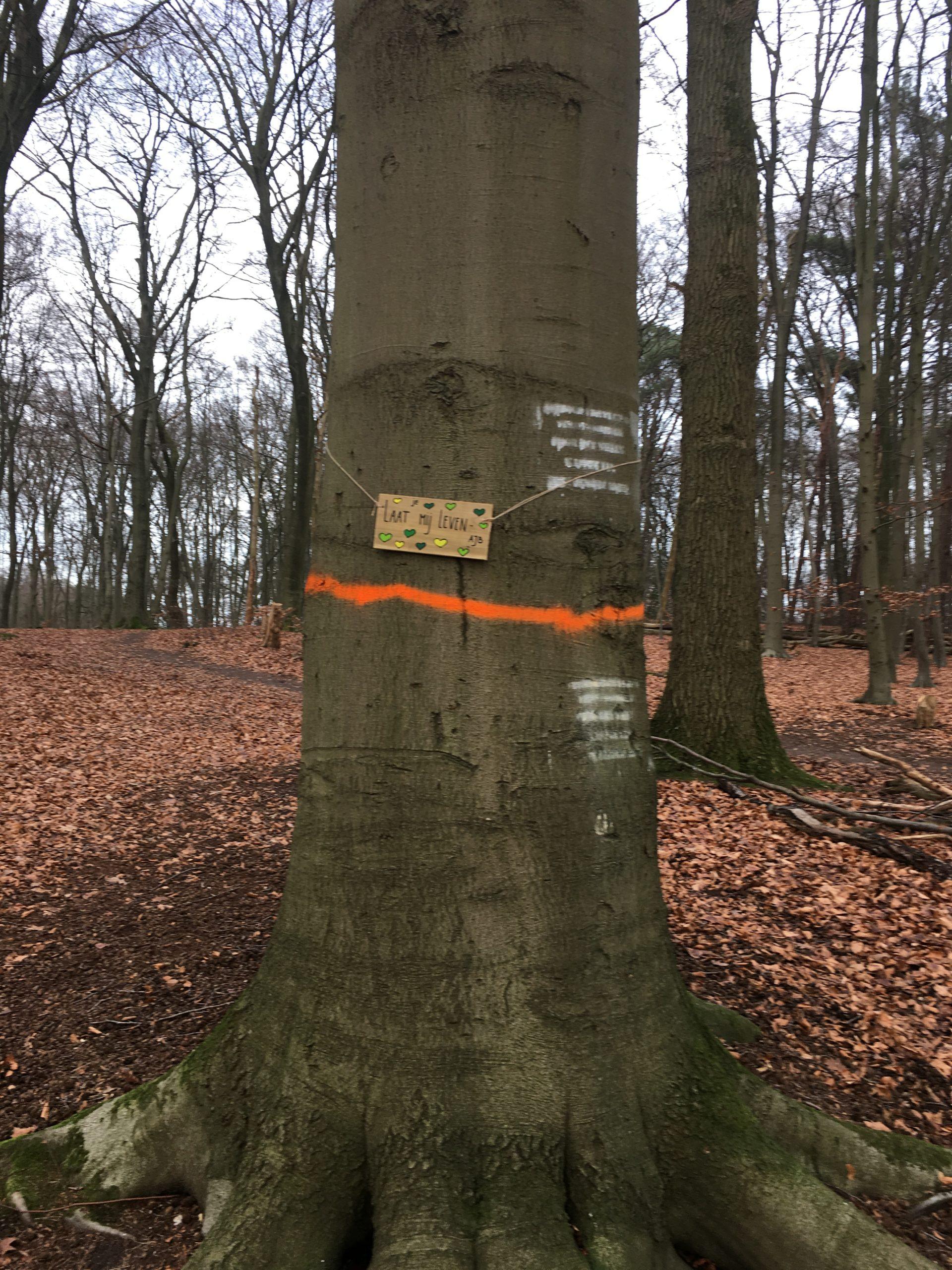 Ruim 90 jaar oude beuk wordt gespaard bij bomenkap/ dunningsprogramma Park Klarenbeek.